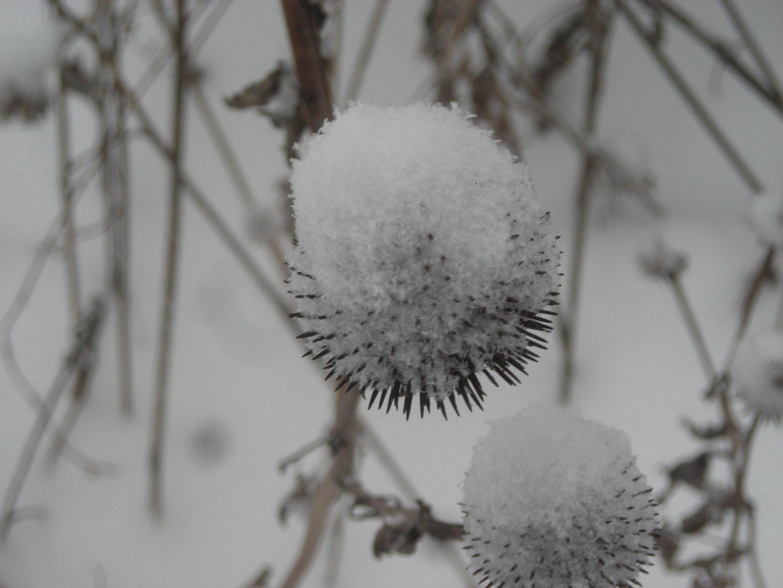 Snow flakes | Lifeonthecutoff's Blog