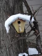 birdhouse under snow