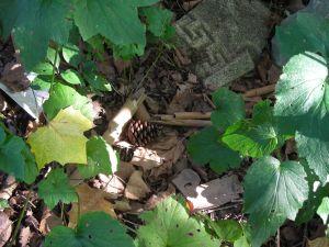 Pine cone:leaves:stones