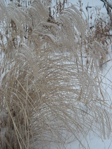 Grasses swaying with snow