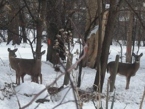 Deer:snow:compost 2