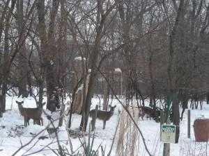 Deer:snow:compost
