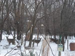 Deer:snow:compost