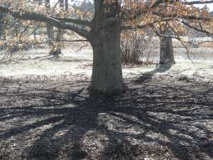 Tree:Morton Arboretum:Shadows #2