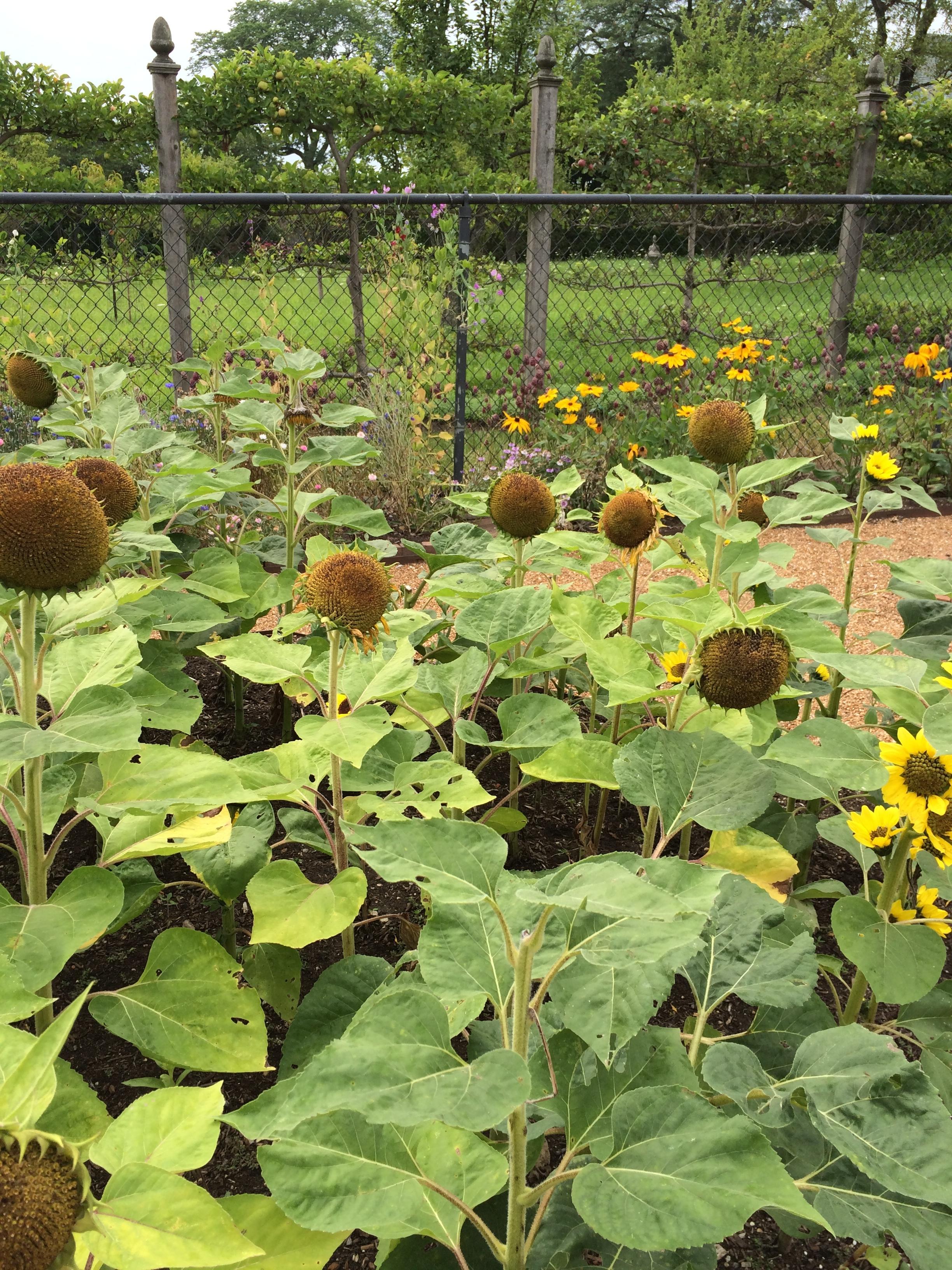 Garden Conservancy Open Days In Illinois Lifeonthecutoff 39 S Blog