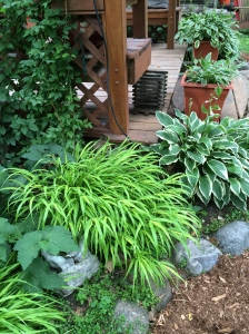 Back of arbor:hostas, grasses