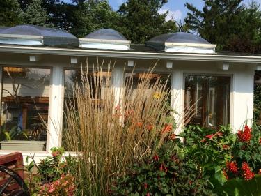 windowssalviagrasses